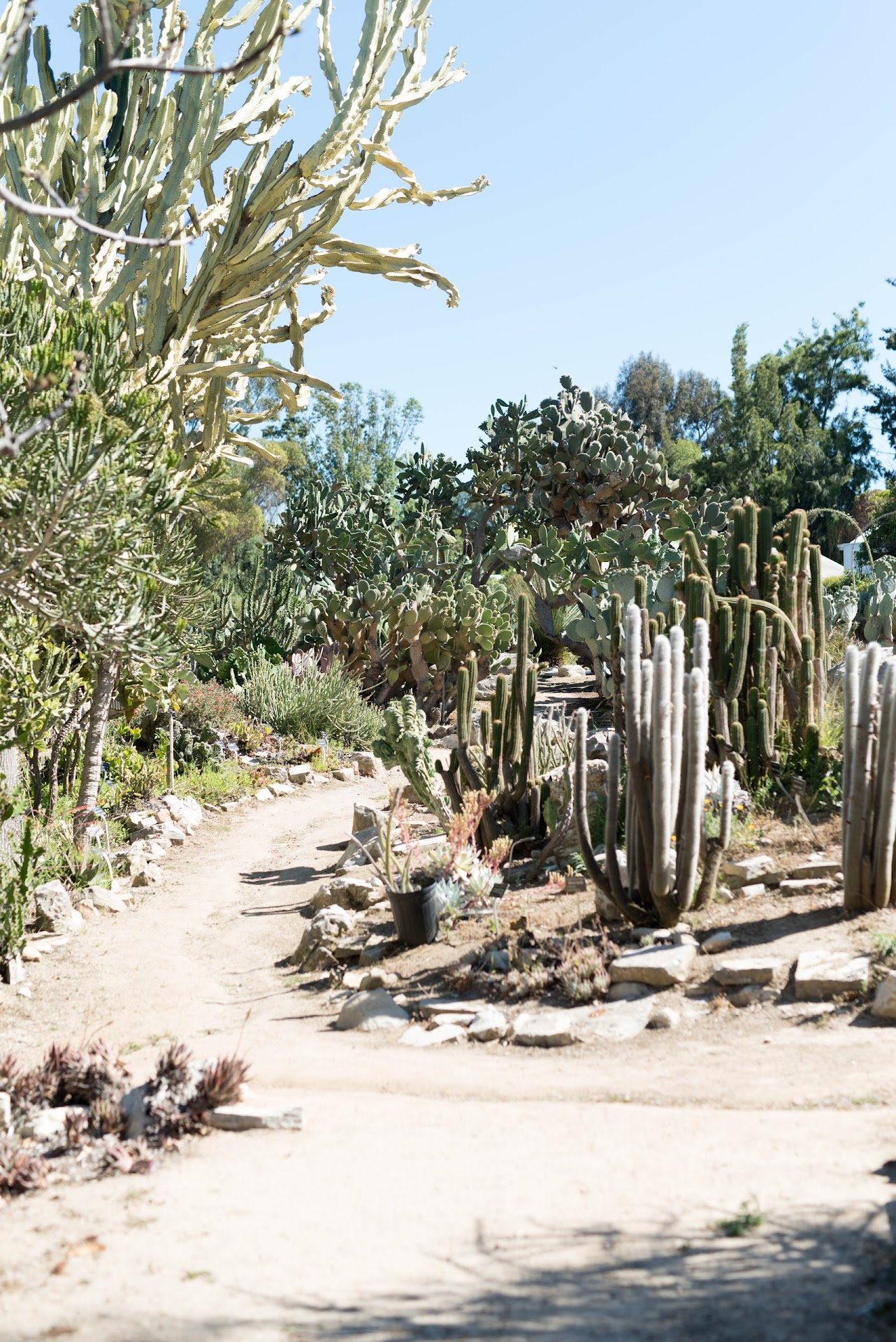 south coast botanic garden, things to do in torrance, southern california, cactus garden, desert
