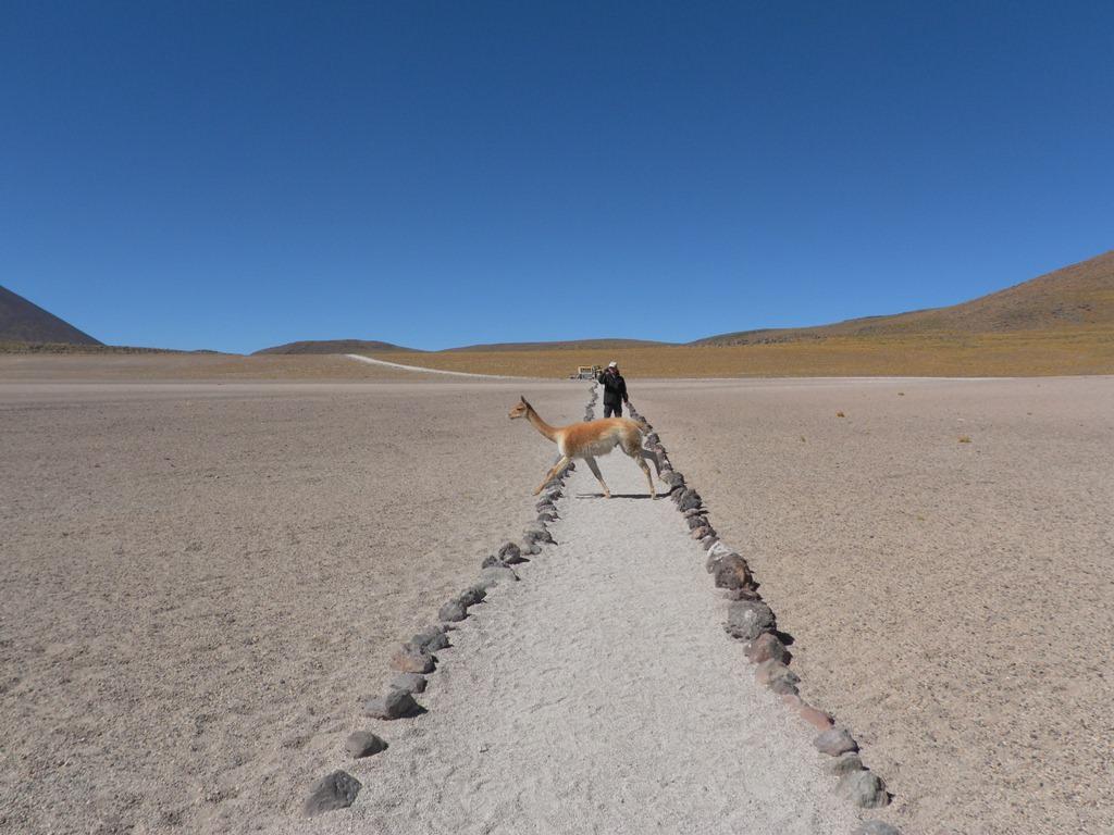 Lagunas Altiplânicas no Atacama