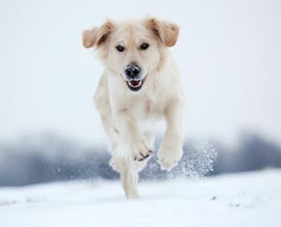 Pas u snegu - Panvet blog