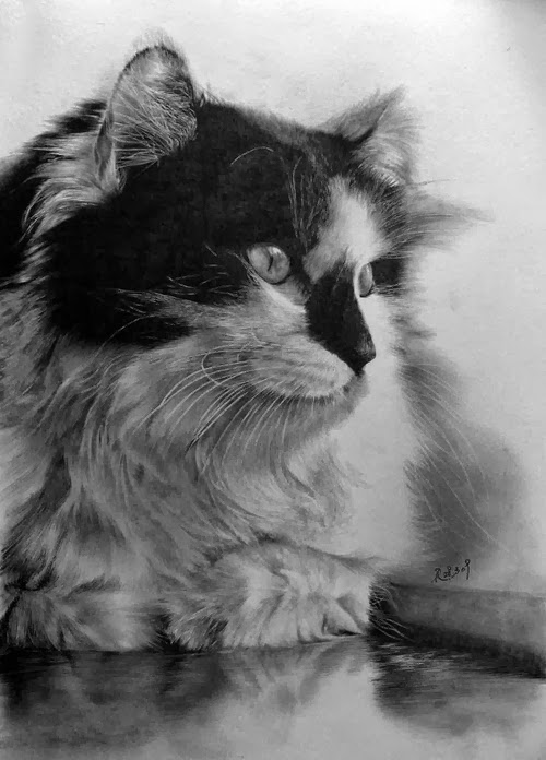 13-Hyper-realistic-Cats-Pencil-Drawings-Hong-Kong-Artist-Paul-Lung-aka-paullung-www-designstack-co
