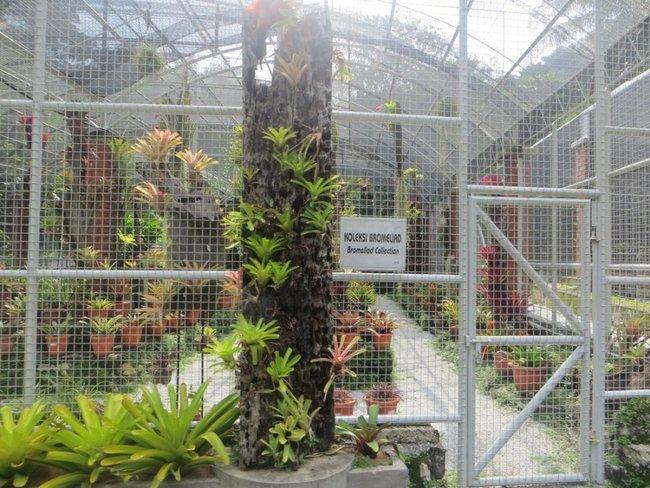 Запертые редкие растения