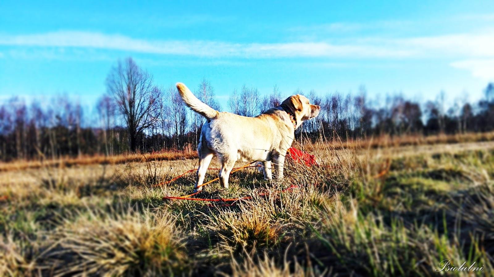 aktywnie z psem, sport z psem, sposoby na urozmaicenie spacerów z psem,