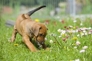 Chiens et plantes d'extérieur qui peuvent rendre votre chien malade