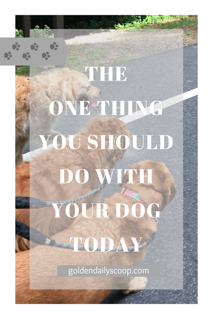 7 benefits of taking your dog for a walk every day