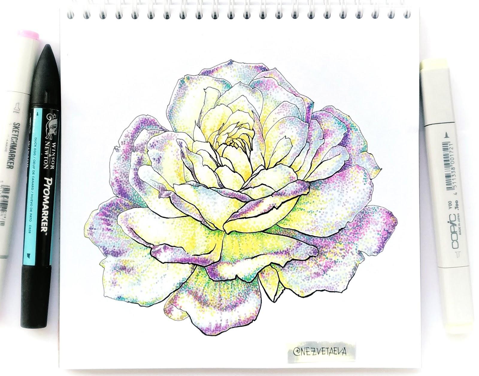 Rose, markers sketch, copic, promarkers, sketchmarker, flower sketch, dotwork, Nezvetaeva, Sonia Nezvetaeva