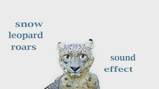 learn leopard sounds