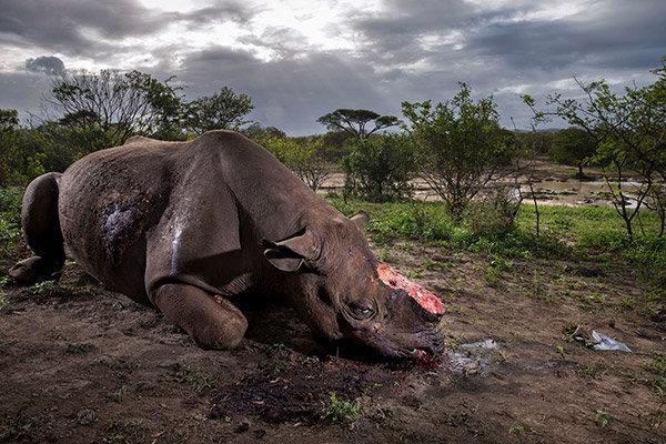 Foto Wildlife Terbaik 2017