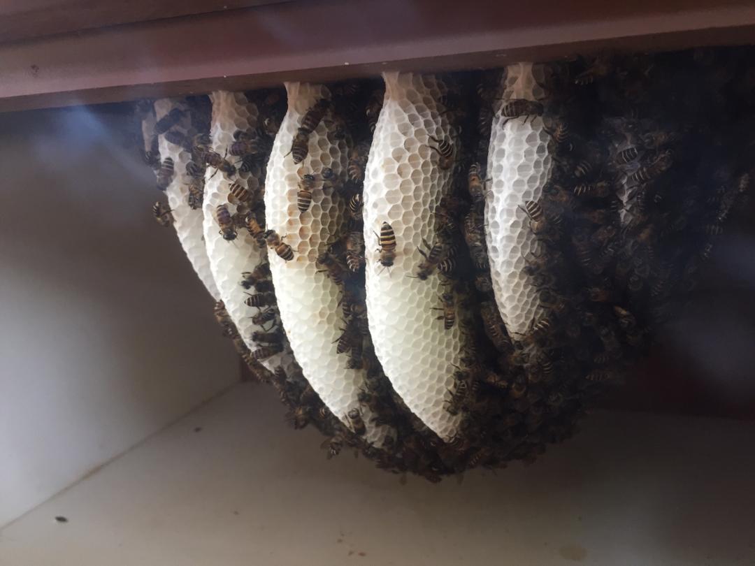 musim sesuai tuai madu, ternakan madu,madu asli, khasiat madu asli