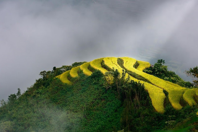 Hoang Su Phi terraced fields - new national heritage of Vietnam 1