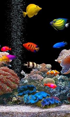 download besplatne slike za mobitele akvarij