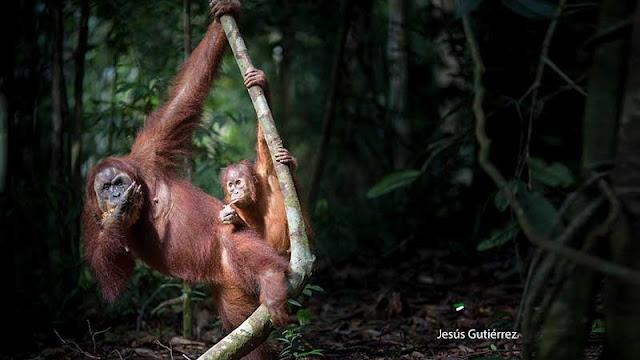 La legendaria tierra de Sumatra
