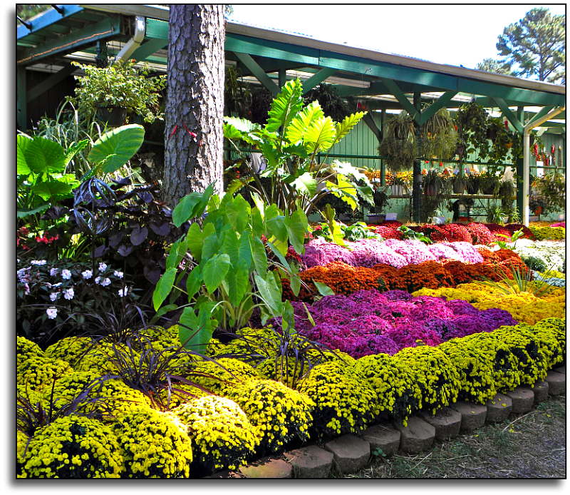 Roses In Garden: A Breath Of Fresh Air: State Fair Flowers And Gardens