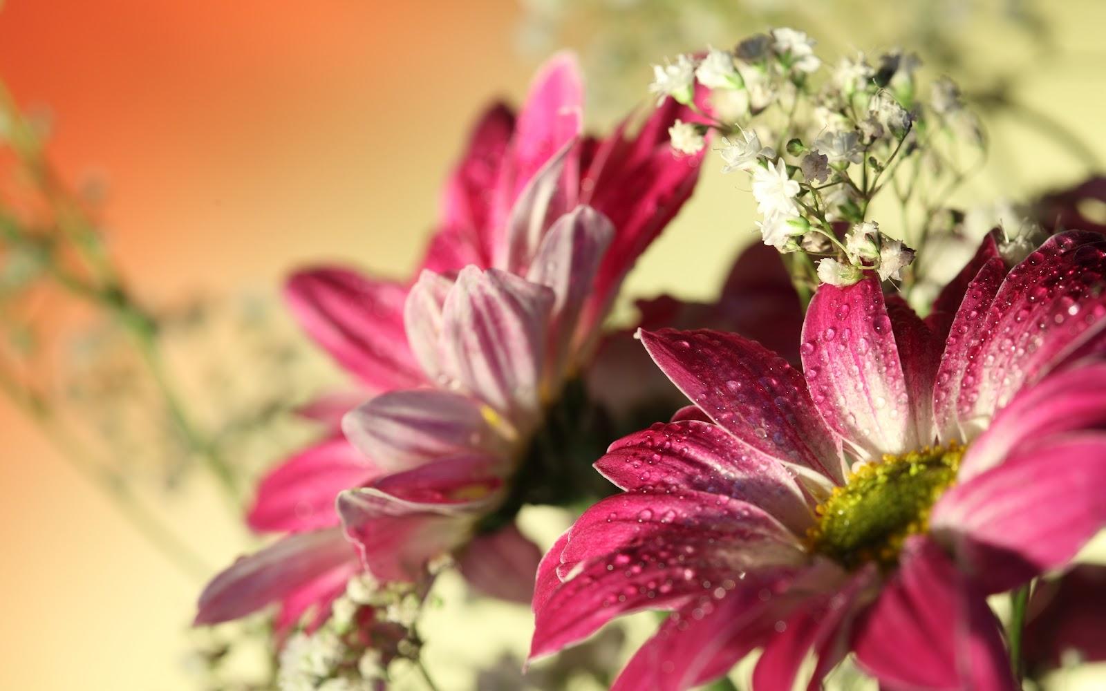Hermosas Flores De Gerbera