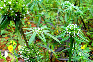 bunga rumput relaks minda
