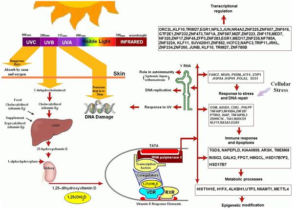 Secretos que tus padres nunca te hablan de Ibuprofeno metabolismo