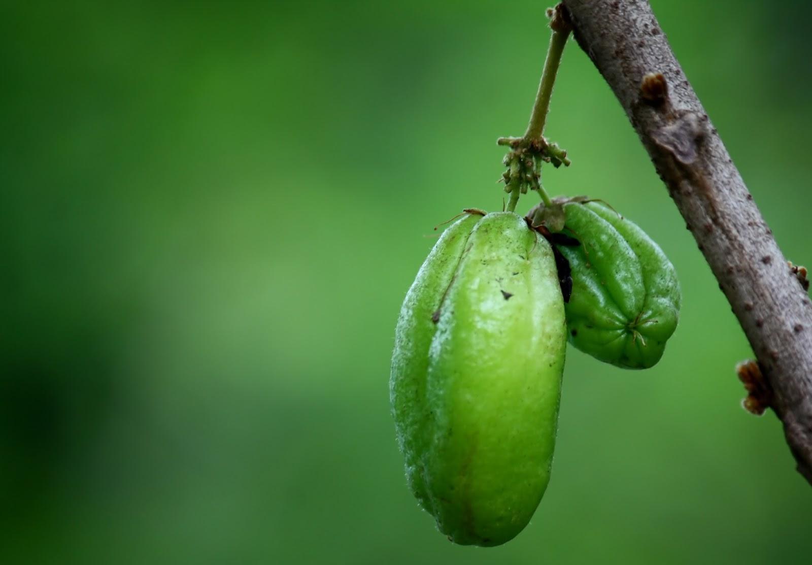 Cara Mudah Menyembuhkan Asam Urat, Hindari 30 Makanan Pantangan