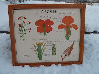 ecole fmr 1000 affiches scolaires les plantes rossignol anciennes affiches scolaires. Black Bedroom Furniture Sets. Home Design Ideas