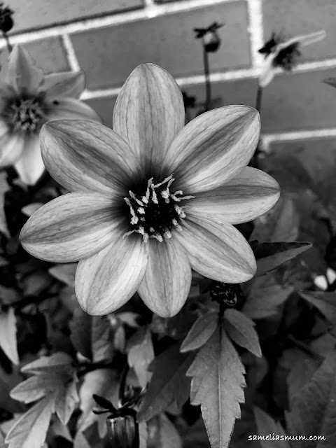 52 Frames: Black and White Challenge - photo by Anorina Morris