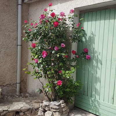 Provence France Roses Printemps Gratitude Pensée positive Count Your Blessings Positive Thinking