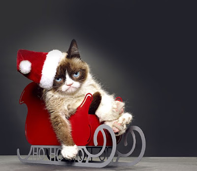 photo d'un chat dans un traineau pour noel