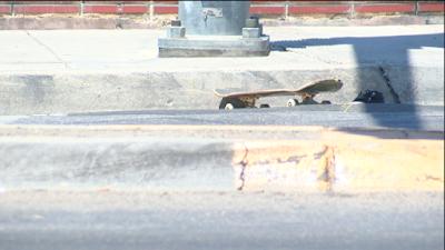 bakersfield big rig crash skateboarder fatality blas sandoval union avenue