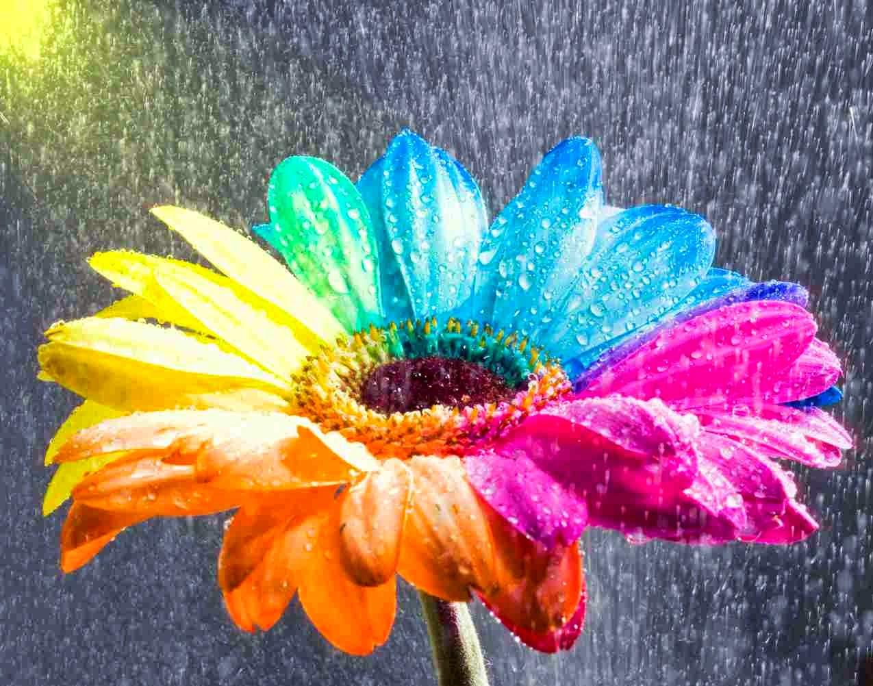 Free Colorful Flower Wallpaper Downloads: All 4u HD Wallpaper Free Download : Beautiful Rainbow