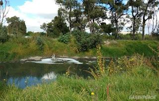 Buscan desde ALDF detener obra hidráulica en área natural