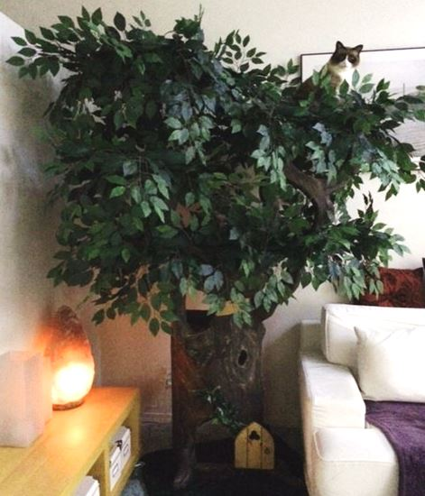 Decorative Cat Furniture