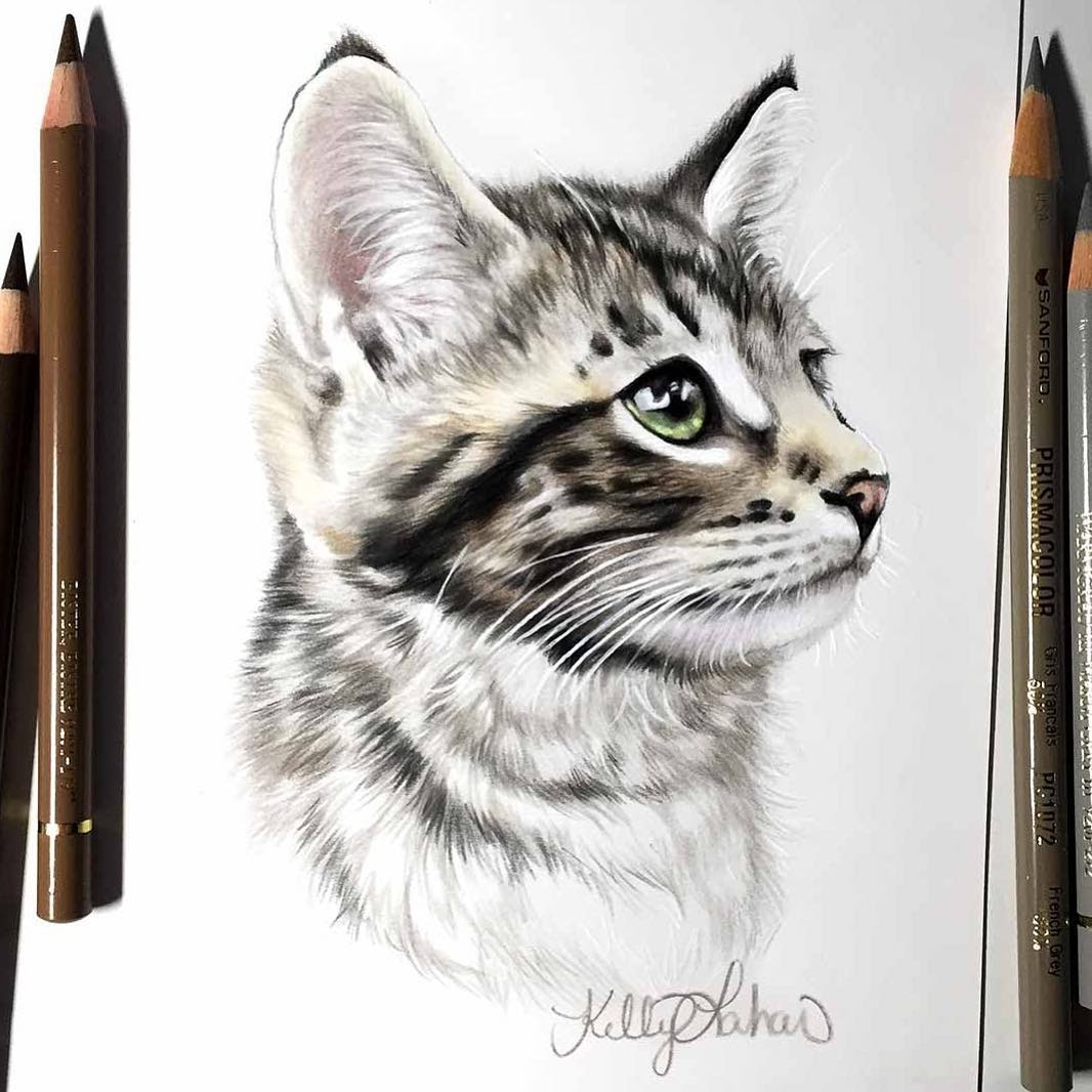 09-Dawson-Kelly-Lahar-Our-Furry-Companions-in-Animal-Drawings-www-designstack-co