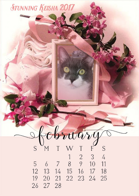 Can You Name the February Cat Holidays?