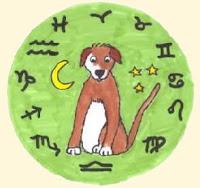 собаья астрология