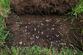 How To Kill Grubs Inside Your Lawn Best Manual Lawn Aerator