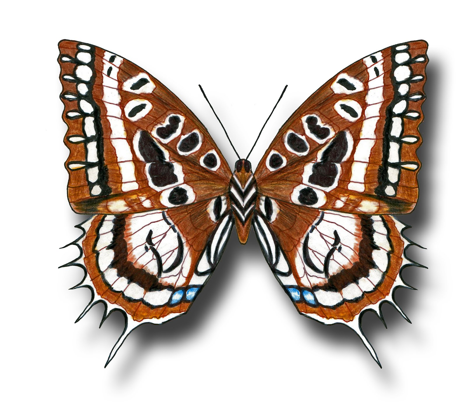 Aileen Biser's Blog: Butterfly Drawings