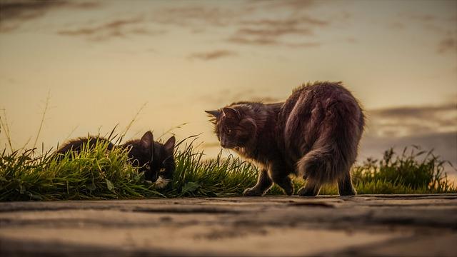 Jenis Kucing Peliharaan Paling Terkenal dan Populer di Dunia