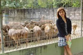 Ayo Berwisata ke Kebun Binatang Gembira loka Yogyakarta