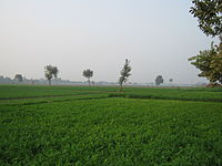 agriculture in sonipat