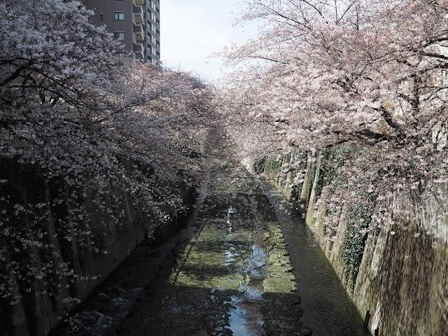 神田川 豊橋