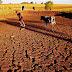 Hạn hán ở Tây Nguyên: Lãnh đủ bời những công trình 'sai lầm thế kỷ'