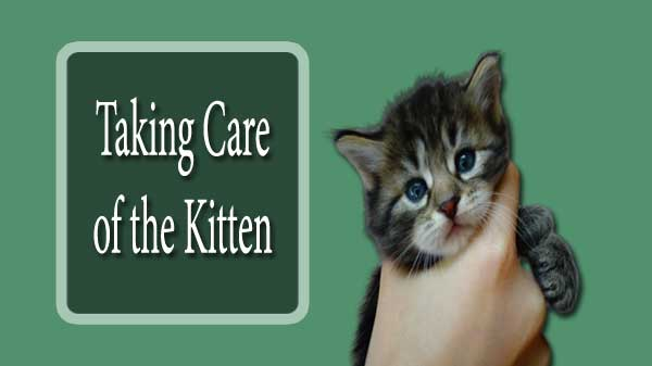 Taking Care of the Kitten