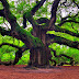 Arbor Day Quotes, Arbor Day Messages, SMS