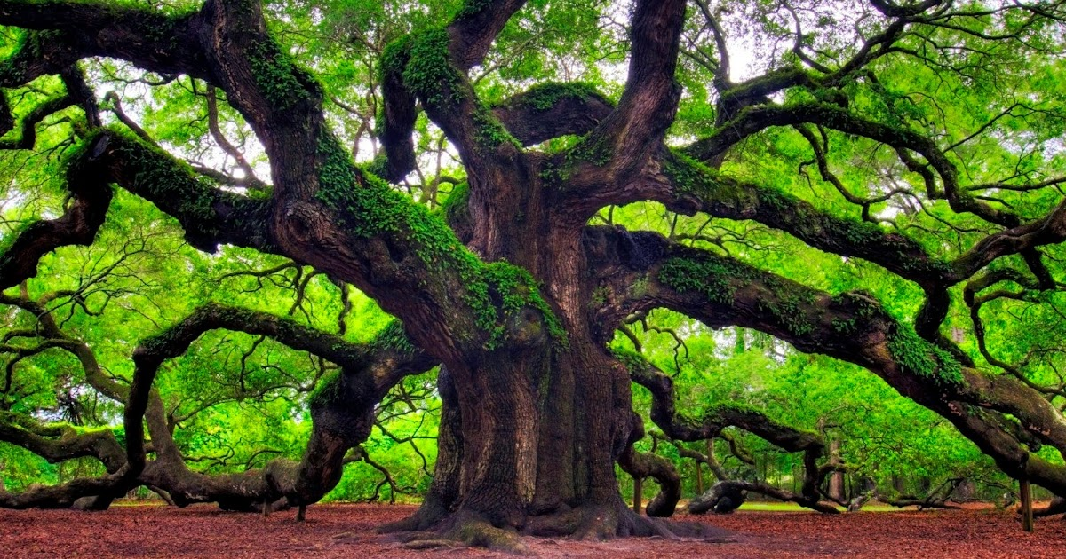 Arbor Day Quotes, Arbor Day Messages, SMS - 2017* Happy Mothers Day ...