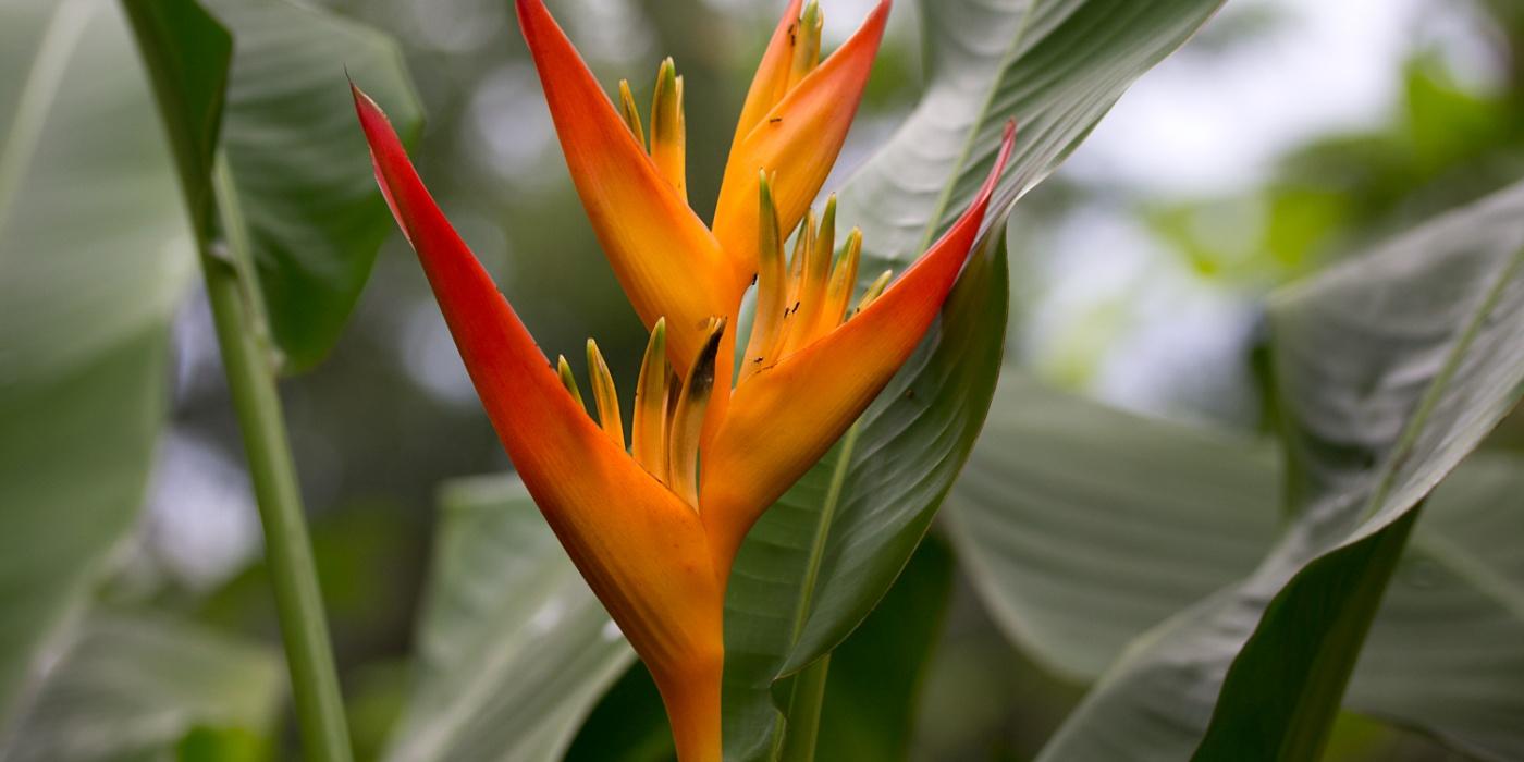 Blog Multi Vaso 8 Plantas Que Atraem Beija Flor Parte 2