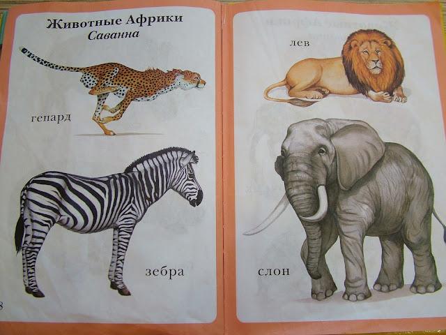 Книги для развития детей 1 года