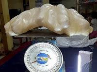 Mutiara Terbesar di Dunia Berhasil Ditemukan Nelayan