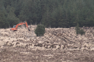 Forestry and Hen Harriers in Ireland