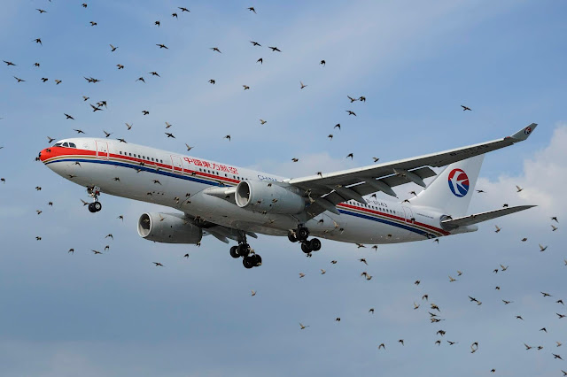 Aircraft bird strike