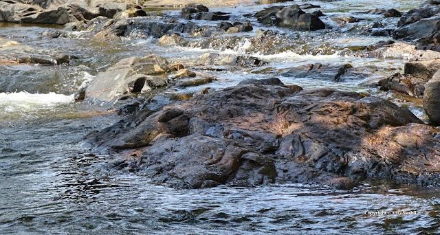 Shallow Water of Kaveri River, Dubare, Coorg