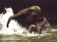 Encyclopaedia Of Babies Of Beautiful Wild Animals Save