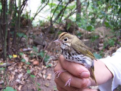 migratory birds Nicaragua