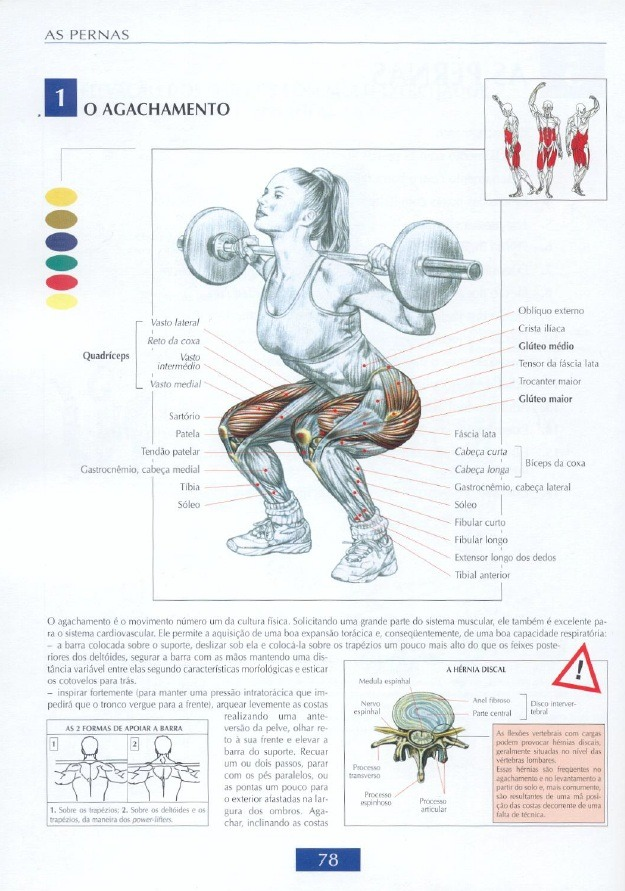 Guia De Movimentos De Musculacao Pdf